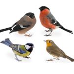 Les amis des oiseaux réunis